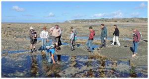 Coastal inter tidal food foraging in Jersey