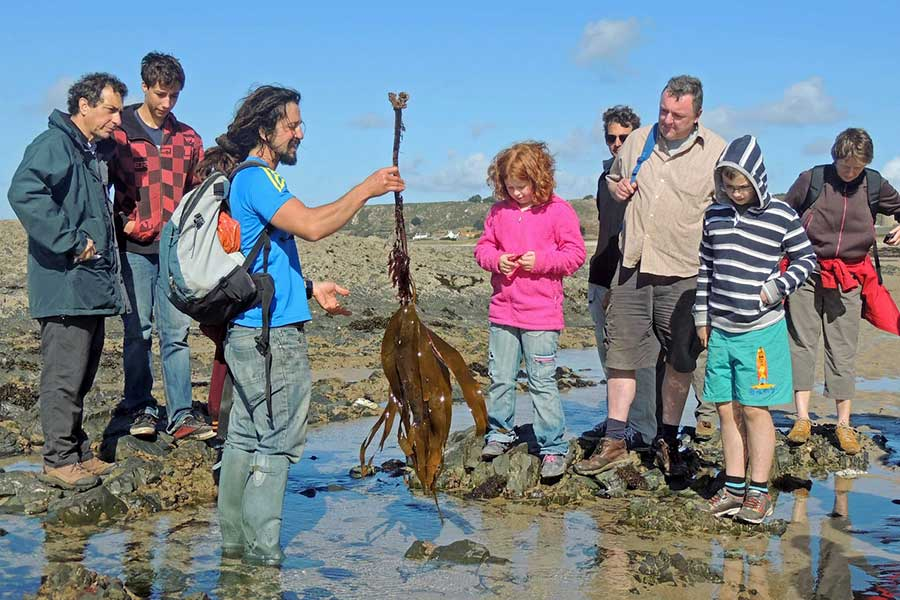 coastal foraging in jersey