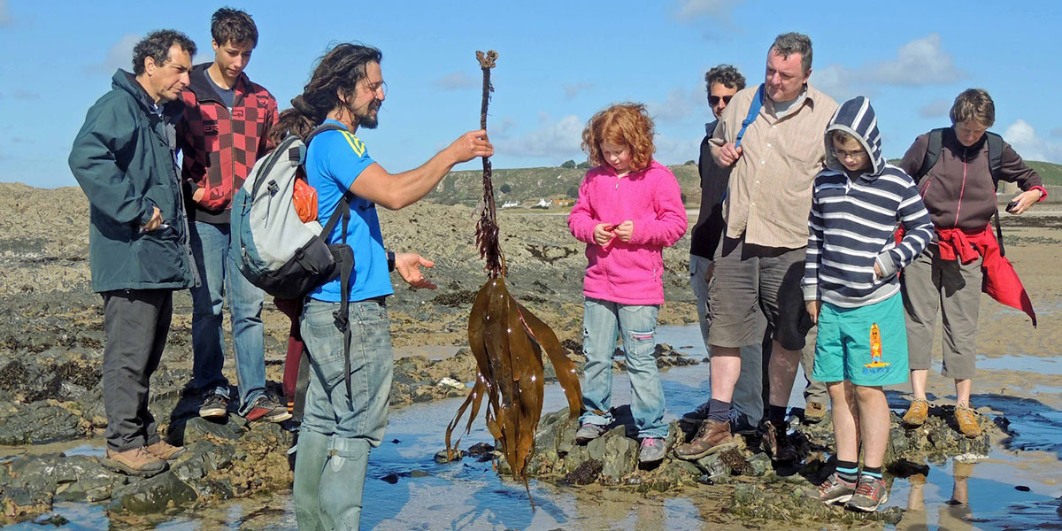 tidal foraging tours in jersey