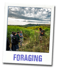 foraging tours in jersey